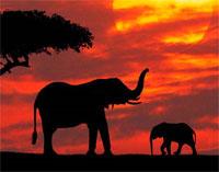 O elefante e a estaca